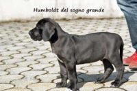 Humboldt del sogno grande
